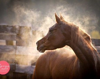 "Misty Arabian horse with sunset light, ""Libre Comme L'air"""