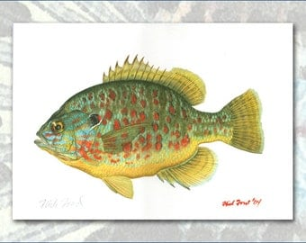 pumpkinseed sunfish color proof by flick ford north american gamefish natural history art
