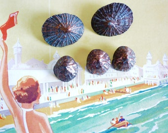 Ahoy! Lovely limpet shell buttons
