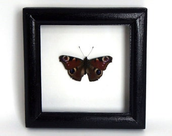 real butterfly frame european peacock wall art red butterfly birthday gift framed butterflies taxidermy display decor frames