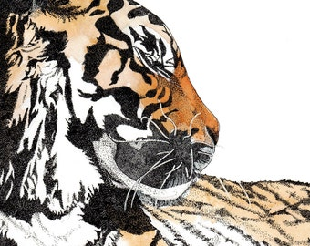 Limited Edition Tiger Illustration || A4 Print