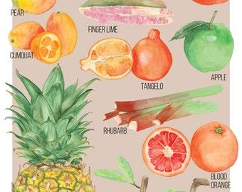 Food Illustration Australian Winter Fruit Guide Watercolour Illustration Print
