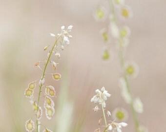 Small White Flower Photograph | Fine Art Photograph | Home Decor | Vertical Photograph