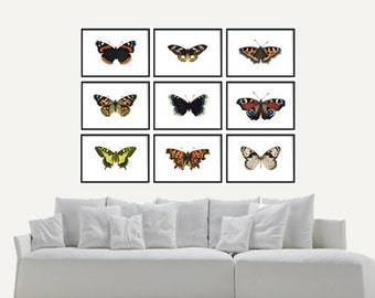 Vintage Butterfly Print Set of 9 prints, Art Print, Giclee Canvas Print - Nature Prints - Natural History Art- Multiple Sizes Available