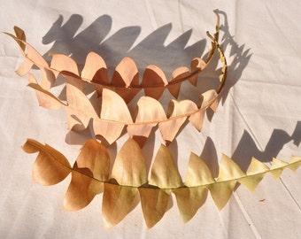 10 Dried Banksia Leaves 20 - 30 cm, Stunning natural display piece, autumn colours, native Australian botanical material for crafts