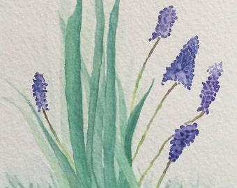 Spring Grape Hyacinth