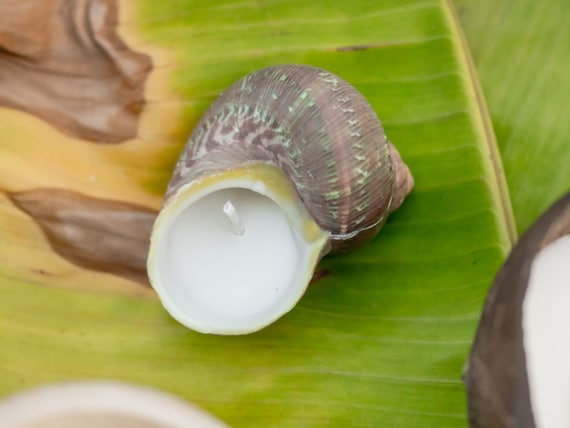 Soy Candles - Philippine Land Snail & Green Turbo Shells