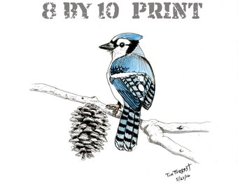 PRINT Blue jay and pine cone 8 by 10