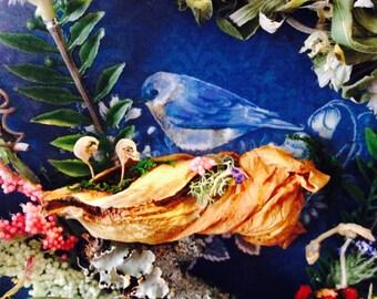 Fairy Book Bluebird of Happiness
