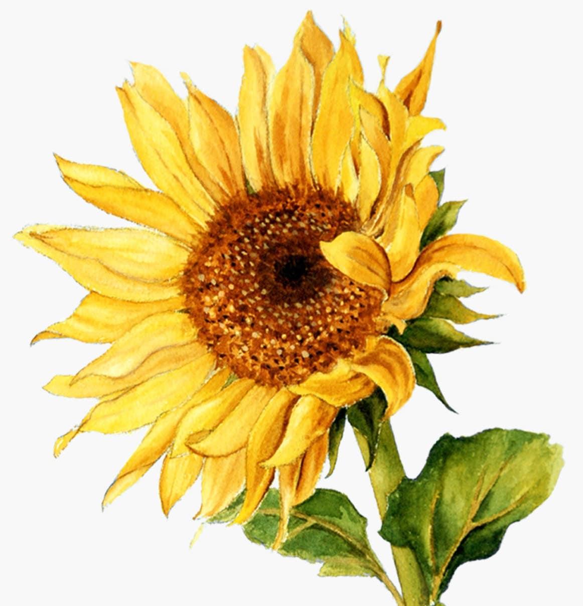 Sunflower Watercolor Clipart Summer Flower Vibrant Wedding