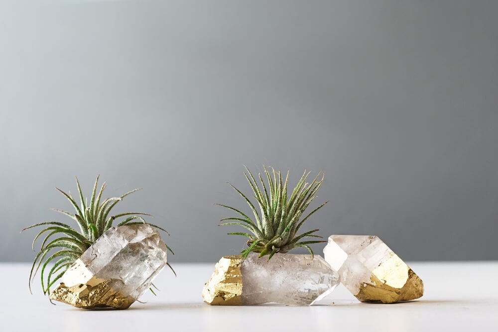 Air plant gold dipped quartz crystal desk accessories best for Air plant decoration