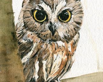 Irish Owl