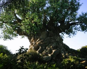 Tree of Life Walt Disney World photography