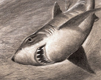 Great White Shark Jaws 8 1/2 x 11 New Cottage Decor Pencil Drawing Fish Art print by Barry Singer