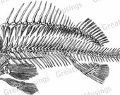 FISH skeleton anatomy black and white clip art digital download image graphics No.0065