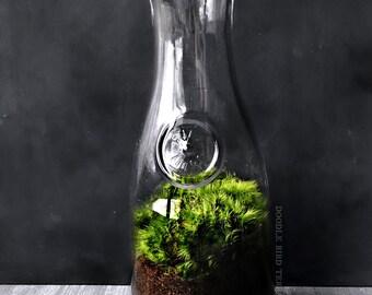 Milk Bottle Terrarium with Fresh Moss