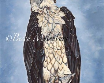bird painting seahawk osprey Original painting raptor birds of prey nature wildlife fine art