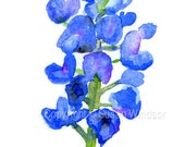 Texas Bluebonnet Watercolor Painting Giclee Print - 5 x 7 - Floral Flower Fine Art