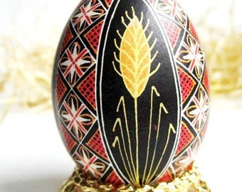 Pysanka egg  batik egg on chicken egg shell, Ukrainian Easter egg, hand painted egg
