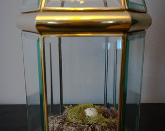 Vintage Brass and Glass Conservatory Cloche