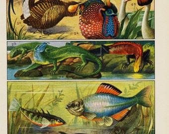 1920 Vintage FAUNA print, birds, reptile, fish,  antique zoology lithograph, vintage print