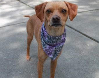 Medium Size Purple and Grey Paisley Tie on Dog Bandana.