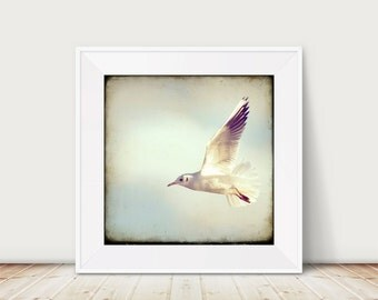 Come fly with Me... - Fine Art Print of a flying Seagull in front of clouds