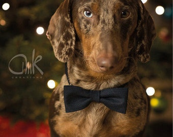 Dog collar with bowtie Size S