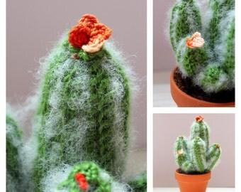 Cactus with flowers ( Succulent garden)