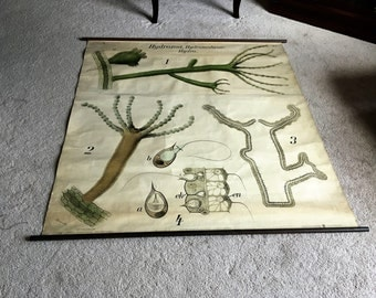 The BEST & BIGGEST old School Chart EVER!  Pull Down Science Class Vintage Old Antique