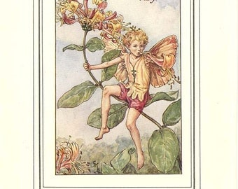 THE HONEYSUCKLE FAIRY Original Antique c 1940 Color Plate The Book of Flower Fairies Cicely Barker