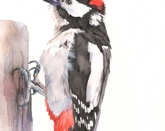 Woodpecker original watercolour painting by Louise De Masi