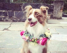Dog Puppy flower crown.  Dog Puppy flower collar.  Flower garland for dogs. Roses and Australian native flowers and foliage.