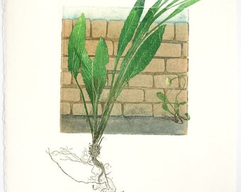 Fine art printmaking. Botanical print, urban weeds. Collagraph with mono print, OOAK