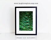 Peacock Tail Photo, Bird Photography, Feathers Print, Cobalt Blue Emerald Green Bold Vibrant Modern Abstract Jewel Tones Home Decor Wall Art