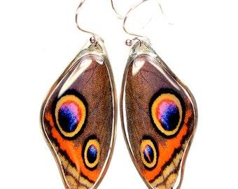 Rare Butterfly Image - Common Buckeye