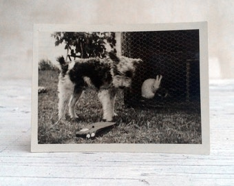 The little puppy and bunny rabbit. Vintage black and white photograph. 1950s