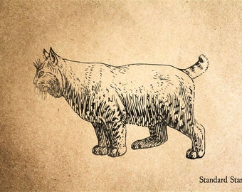 Bobcat Rubber Stamp - 3 x 2 inches