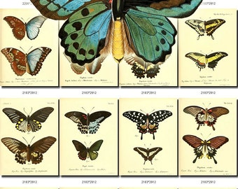 BUTTERFLIES-19-b5 Collection of 171 vintage illustration pictures image High resolution digital download printable moths 300 dpi lepidoptera