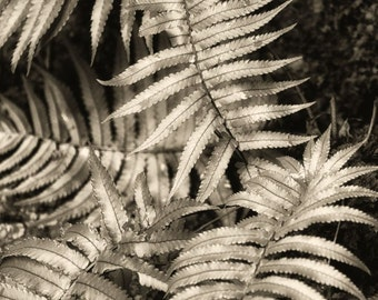 Sepia and Silver Ferns