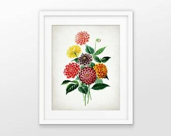 Dahlia Flower Art Print - Dahlia Plant Illustration - Botanical Flower Art - Botanical Print - Single Print #1732 - INSTANT DOWNLOAD
