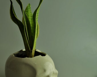 Mr. Pot: A minimalistic skull planter
