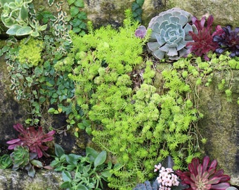 Nature Photography | Succulent Wall