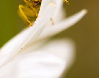 Pollen covered insect