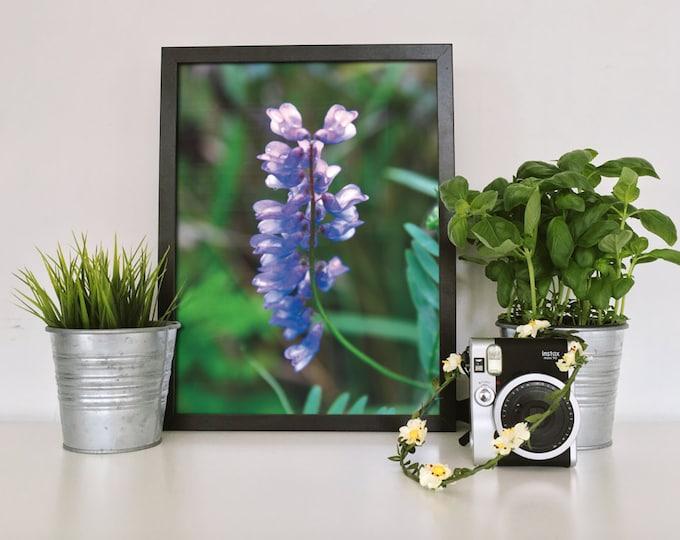 Flower photography Purple flower Flower print Flower art Field flower Purple photography Nature Print Botanical prints Floral nursery print