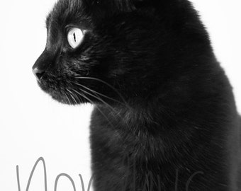 Black Cat Kitten Printable Digital Photography Macro Photography.