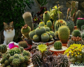 Cactus Seeds - 200+ Seeds - Succulent Seeds - Succulent Plants - Rare Seeds - Flower Seeds - Plant Seeds - Cacti Seeds - House Plants