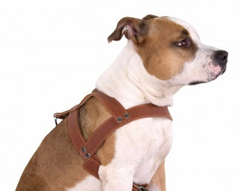 Leather Dog Harness Pitbull Amstaff Free PERSONALIZED nameplate