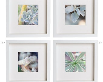 5x5 Fine Art Photography Print . Succulents . Cactus . Flowers . Plants . Nature . Gift Set Prints for Ikea Ribba Frame . Home Decor