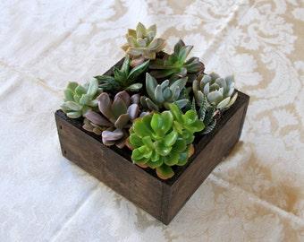 Wooden Box Succulent Planter Centerpiece